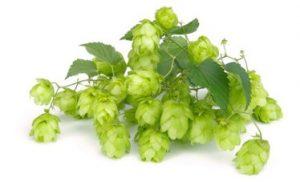 hops4