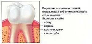 parodont