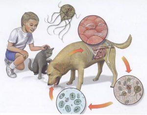 zarazhenie-analizy-i-lechenie-lyamblioza